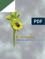 03_orquideas