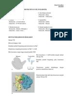Perbedaan Sel Prokariotik Dengan Sel Eukariotik