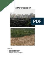 Los problemas de la deforestación