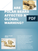 Polar Bears by Aranza Bio 24bxjnw
