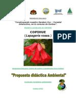 copihue_almacigo