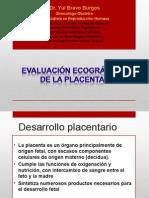 Placenta y Cordon_yulbb