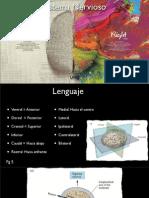 Generalidades Del Sistema Nervioso 2
