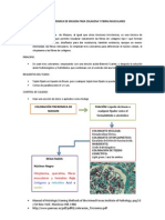 TINCION TRICROMICA DE MASSON PARA COLAGENA Y FIBRAS MUSCULARES.docx