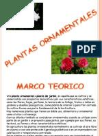 plantasornamentales-120422212333-phpapp02