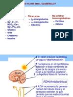 Homeostasis Glomerulo