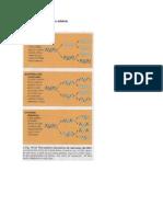 Producto de oxidación de un aldehído