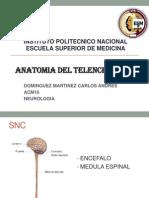 Anatomia Del Telencefalo