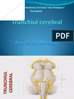 Trunchiul Cerebral
