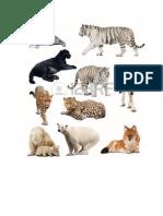 Animales Carnivoros, Herviboros y Mamiferos