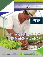 Plantulas de Invernadero