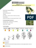Caña de Azucar - Cartilla 14 Condiciones Agroclimaticas del Cultivo de la Caña de Azucar