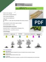 Esparrago - Cartilla 15 Condiciones Agroclimaticas Del Cultivo de Esparrago