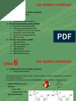 06_cidos_nucleicos