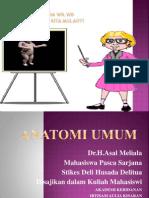 anatomi-umum