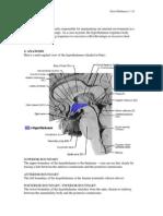 5045 Hypothalamus