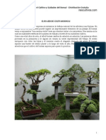 Manual Bonsai Completo