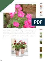 Conheça e Saiba como Cultivar as Mini Rosas