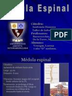 mdula-espinal1838