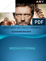 anatomiadeltallocerebral-130711232131-phpapp02