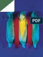 14_Transgenicos_Investigacion_y_Ciencia-Junio_2001Investigación y ciencia 297 - Junio 2001