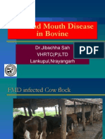 Foot and Mouth Disease 1