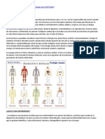 Cuerpo Fisico y Glandulas