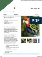 Rosella Multicolor (Platycercus eximius).pdf