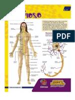 Sistema Nervioso y Endocrino