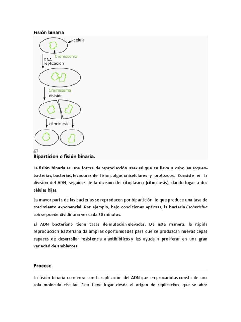 Opciones binarias bully pdf download