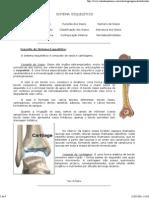 Aula de Anatomia - Sistema Ósseo[1]