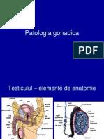 Patologia gonadica