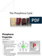 The Phosphorus Cycle (1)