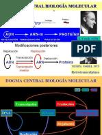 TEMA 8 REPLICACIÓN DEL ADN