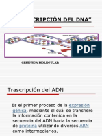 Transcripcion Para Conferencia