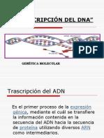 Transcripcion Para Conferencia