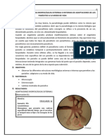 OBSERVACIÓN DE ESTRUCTURAS MORFOLÓGICAS EXTERNAS O INTERNAS DE ADAPTACIONES DE LOS PARÁSITOS A SU MODO DE VIDA (Reparado).docx