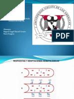 RESPUESTAS Y ADAPTACIONES HEMATOLÓGICAS 2 .pptx