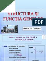 Curs 3 Genetica Structura Si Functia Genei