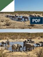 elefantisches_pdf datei.pdf