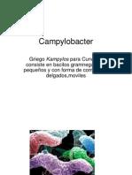 14 - campylobacter helicobacter