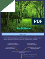 ANABOLISMO y FOTOSINTESIS
