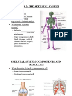 Skeleton SP14 Student