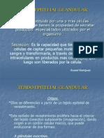 Tejido Glandular Epitelial Glandular