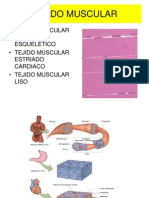 Tejido Muscular (Clase )