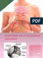 _GLÁNDULA