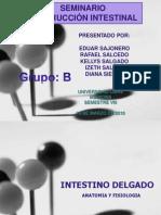 obstruccinintestinal-110507134857-phpapp02 -1-