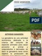 ACTIVIDAD GANADERA