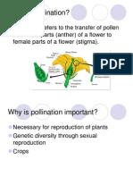 ppt- pollination
