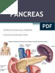 pancreas-091106094648-phpapp02